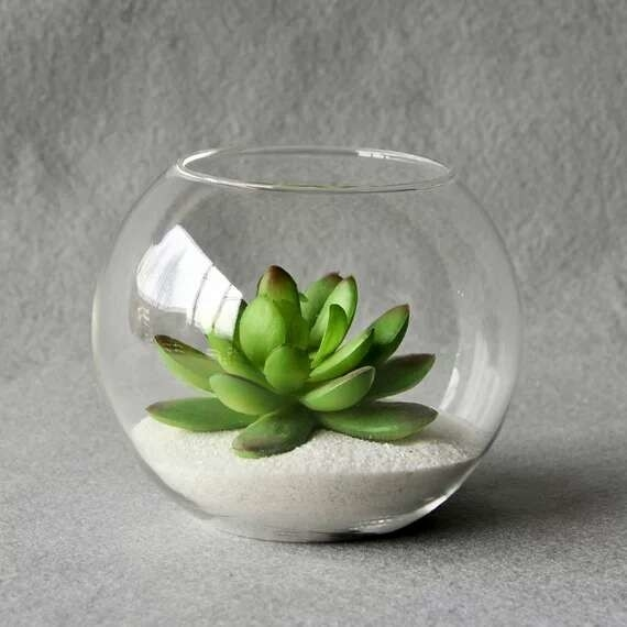 Round Plant Candle Glass Cups Ball Gree Plant Live For Home Decoration